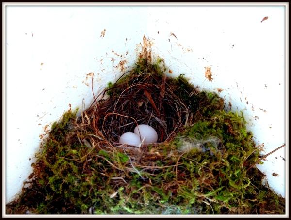 bird nest 2014 with eggs-001