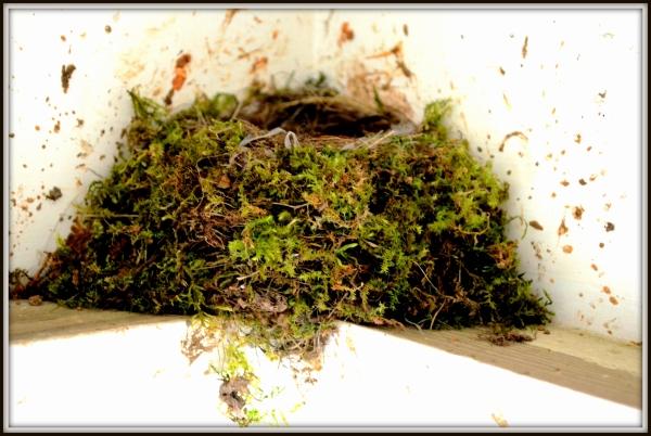 Bird's nest-001