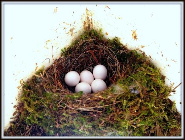 birds nest april 24 2014-003